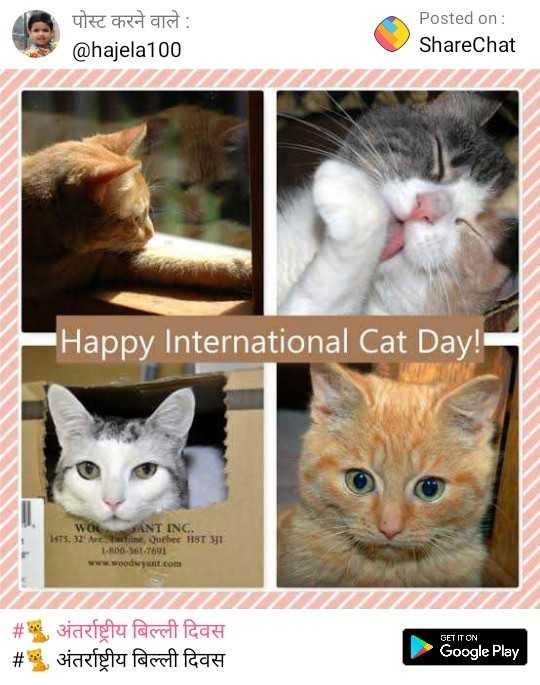 🐈 अंतर्राष्ट्रीय बिल्ली दिवस - पोस्ट करने वाले : @ hajela100 Posted on : ShareChat Happy International Cat Day ! WOSANT INC . 75 , 32 Ave , wine , Quebec HST 31 | 1 - 10 - 08 - 7691 www . woodwyant . com _ _ _ _ _ _ _ _ _ _ _ _ _ _ _ _ _ _ _ # अंतर्राष्ट्रीय बिल्ली दिवस # अंतर्राष्ट्रीय बिल्ली दिवस GET IT ON Google Play - ShareChat