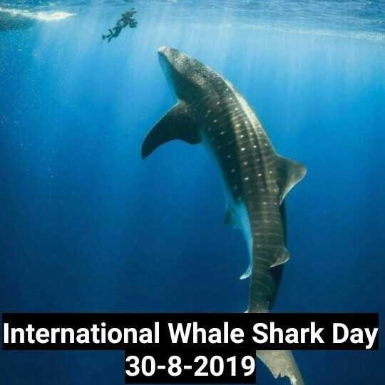 🦈 अंतर्राष्ट्रीय व्हेल शार्क दिवस - International Whale Shark Day 30 - 8 - 2019 - ShareChat