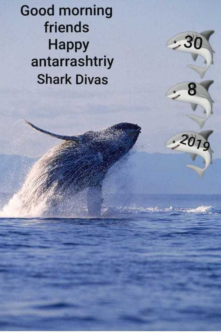 🦈 अंतर्राष्ट्रीय व्हेल शार्क दिवस - Good morning friends Happy antarrashtriy Shark Divas 30 . 2019 - ShareChat