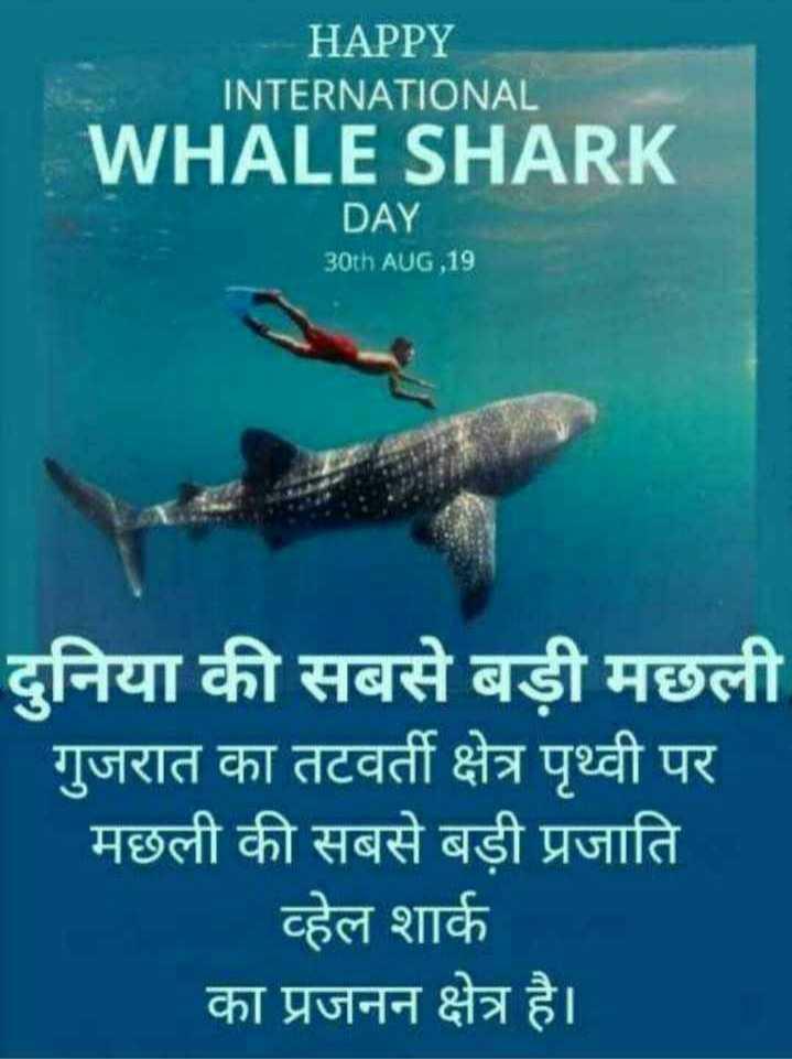 🦈 अंतर्राष्ट्रीय व्हेल शार्क दिवस - HAPPY INTERNATIONAL WHALE SHARK DAY 30th AUG , 19 दुनिया की सबसे बड़ी मछली गुजरात का तटवर्ती क्षेत्र पृथ्वी पर मछली की सबसे बड़ी प्रजाति व्हेल शार्क का प्रजनन क्षेत्र है । - ShareChat