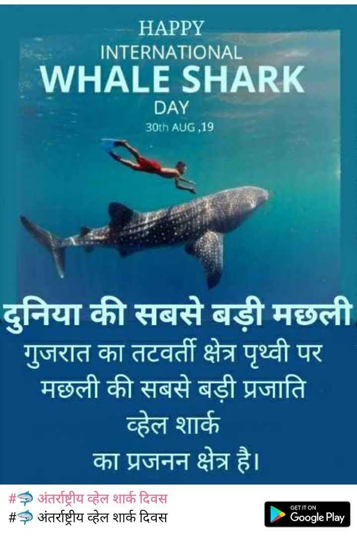 🦈 अंतर्राष्ट्रीय व्हेल शार्क दिवस - HAPPY INTERNATIONAL WHALE SHARK DAY 30th AUG , 19 दुनिया की सबसे बड़ी मछली गुजरात का तटवर्ती क्षेत्र पृथ्वी पर मछली की सबसे बड़ी प्रजाति व्हेल शार्क का प्रजनन क्षेत्र है । # अंतर्राष्ट्रीय व्हेल शार्क दिवस # अंतर्राष्ट्रीय व्हेल शार्क दिवस GET IT ON Google Play - ShareChat