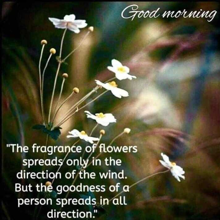 👌 अच्छी सोच👍 - Good morning The fragrance of flowers spreads only in the direction of the wind . But the goodness of a person spreads in all direction . - ShareChat