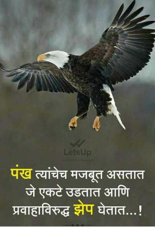 🎂अल्लू अर्जुन बर्थडे - LetsUp पंख त्यांचेच मजबूत असतात जे एकटे उडतात आणि प्रवाहाविरुद्ध झेप घेतात . . . ! - ShareChat
