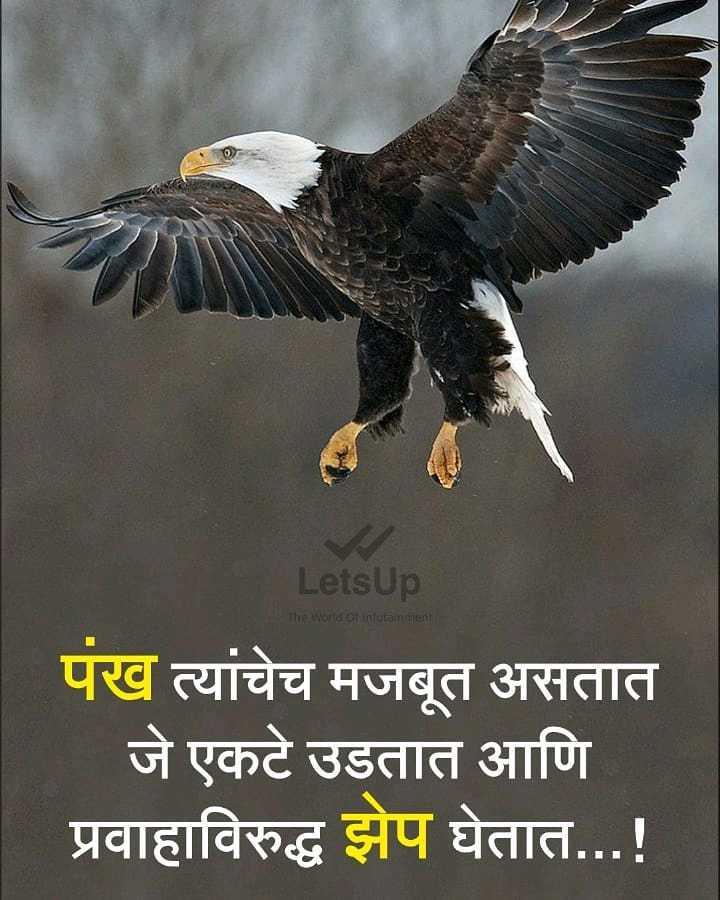 😈अॅटिट्युड स्टेटस - LetsUp The World of interament पंख त्यांचेच मजबूत असतात जे एकटे उडतात आणि प्रवाहाविरुद्ध झेप घेतात . . . ! - ShareChat