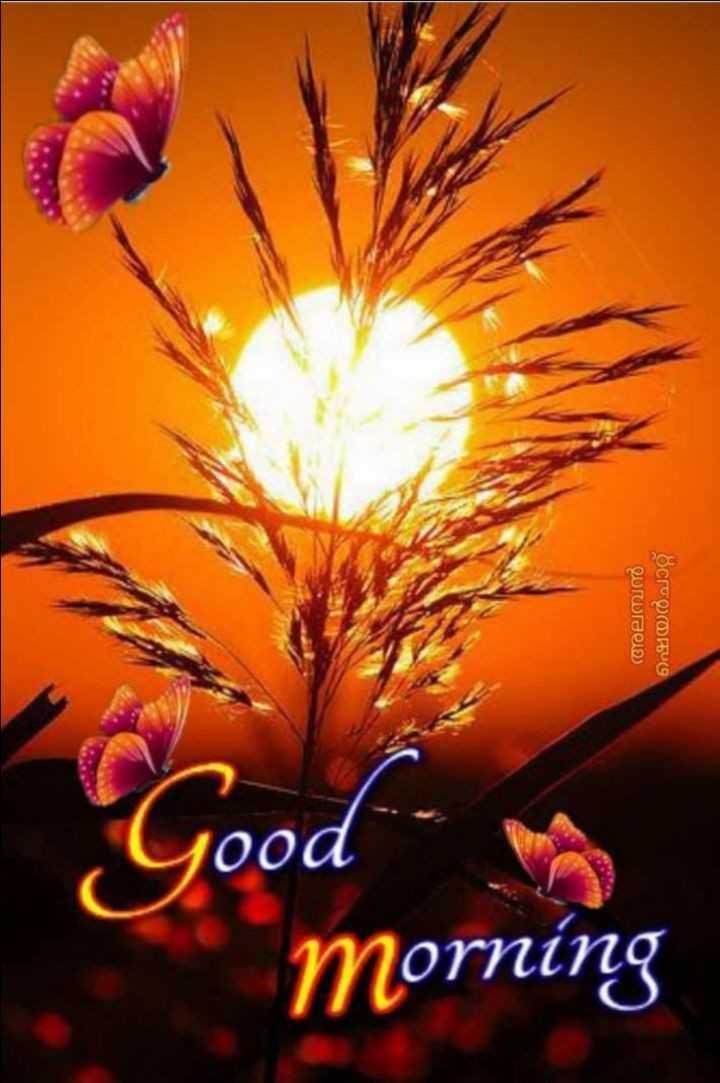 🖼 आर्ट और पेंटिंग्स - അലമ്പൻ ഷയർചാറ്റ് Good morning - ShareChat