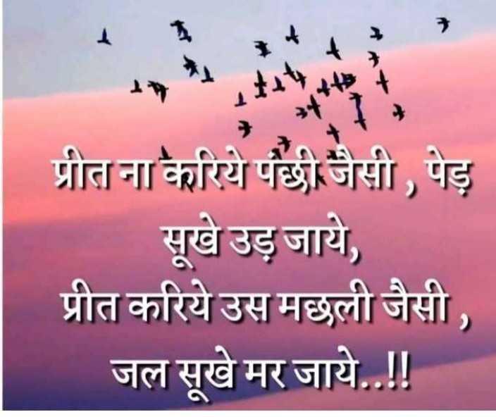 💗 इंदौर - दिलवालों का शहर 💗 - - प्रीत ना करिये पंछी जैसी , पेड़ सूखे उड़ जाये , प्रीत करिये उस मछली जैसी , जल सूखे मर जाये . . ! ! - ShareChat