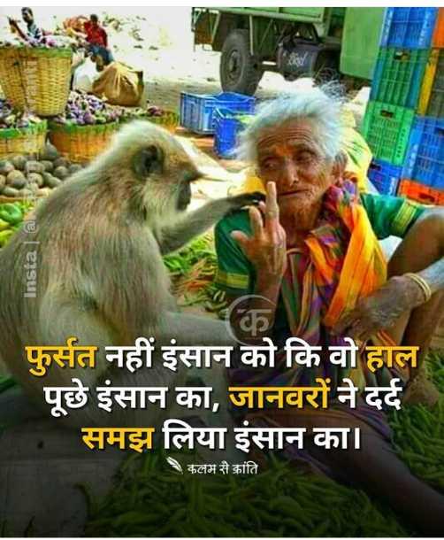 💗 इंदौर - दिलवालों का शहर 💗 - Instal @ NESS फुर्सत नहीं इंसान को कि वो हाल पूछे इंसान का , जानवरों ने दर्द समझ लिया इंसान का । 1 , कलम से क्रांति - ShareChat