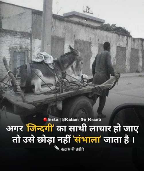 💗 इंदौर - दिलवालों का शहर 💗 - Insta { @ Kalam Insta @ Kalam _ Se _ Kranti अगर ' जिन्दगी का साथी लाचार हो जाए तो उसे छोड़ा नहीं ' संभाला जाता है । कलम से क्रांति - ShareChat