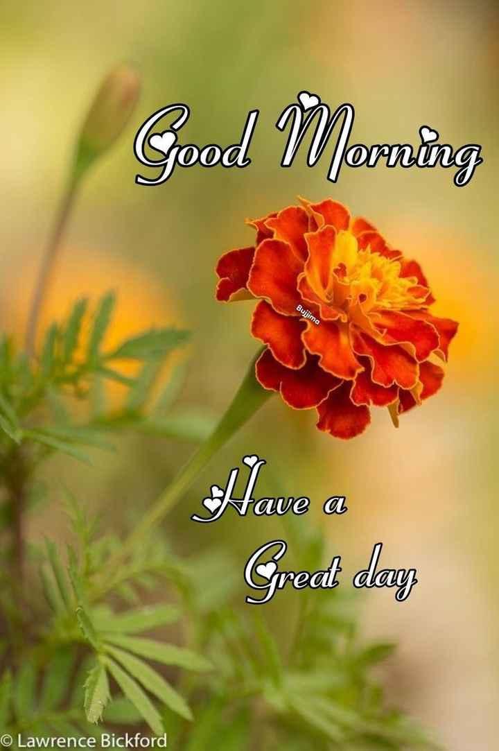 💐इतर शुभेच्छा - Good Morning Bujjima Alave a Great day © Lawrence Bickford - ShareChat