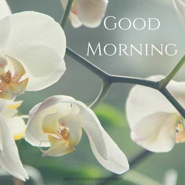 इमेज स्टेटस - GOOD MORNING www . birthdaywishes . expert - ShareChat