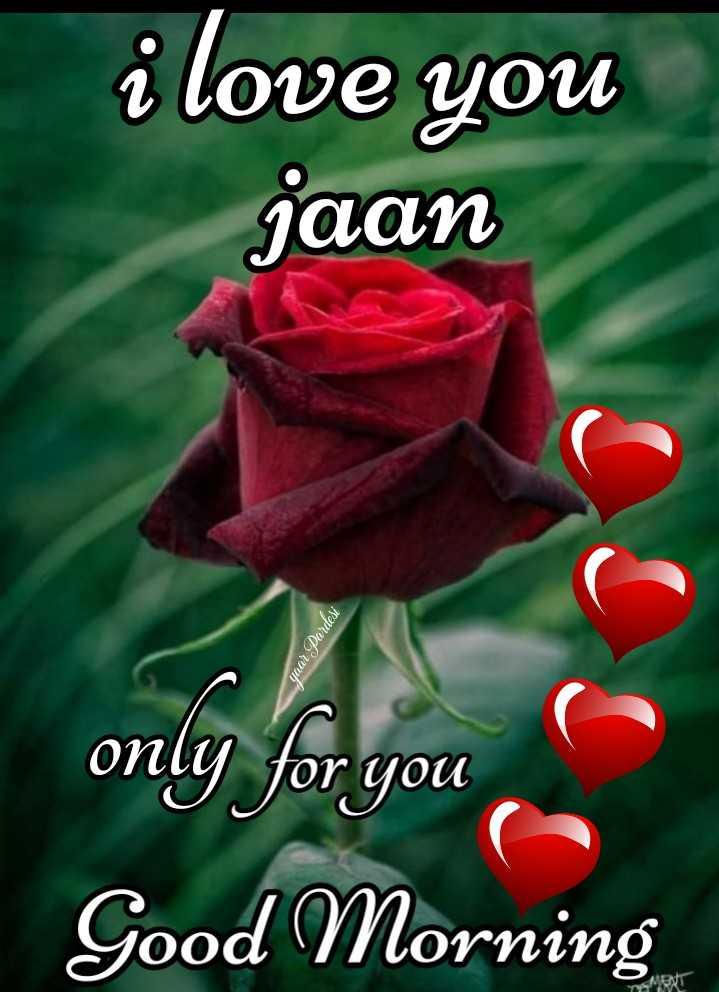 💏 इश्क़-मोहब्बत - i love you jaan yaar Pardesi only for you Good Morning - ShareChat