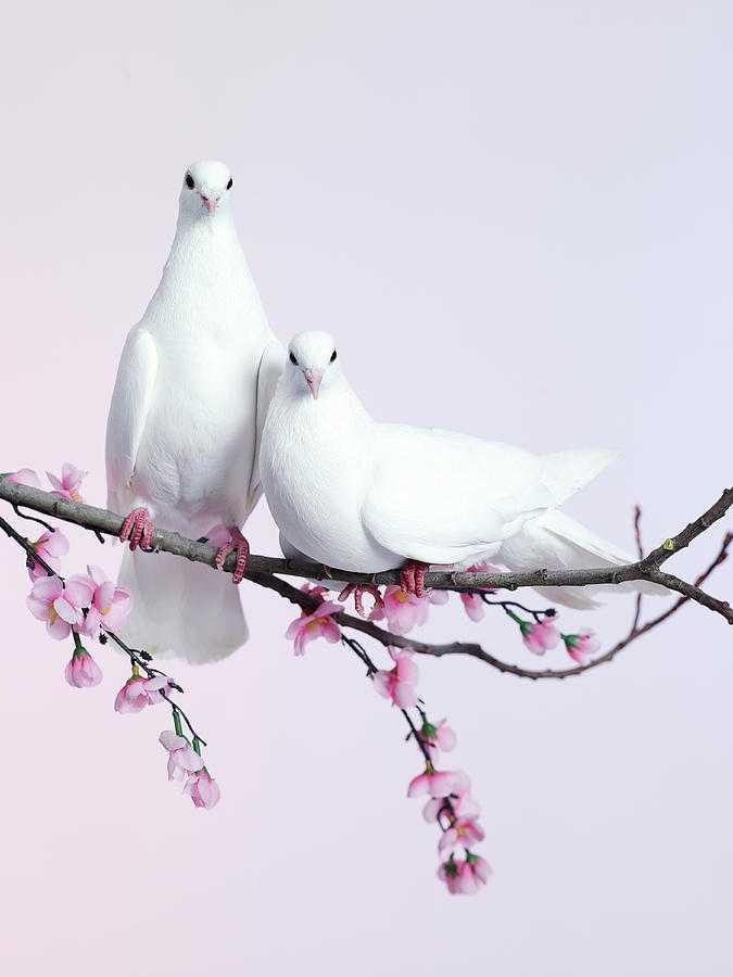 🐢 एनिमल फोटोग्राफर - ShareChat