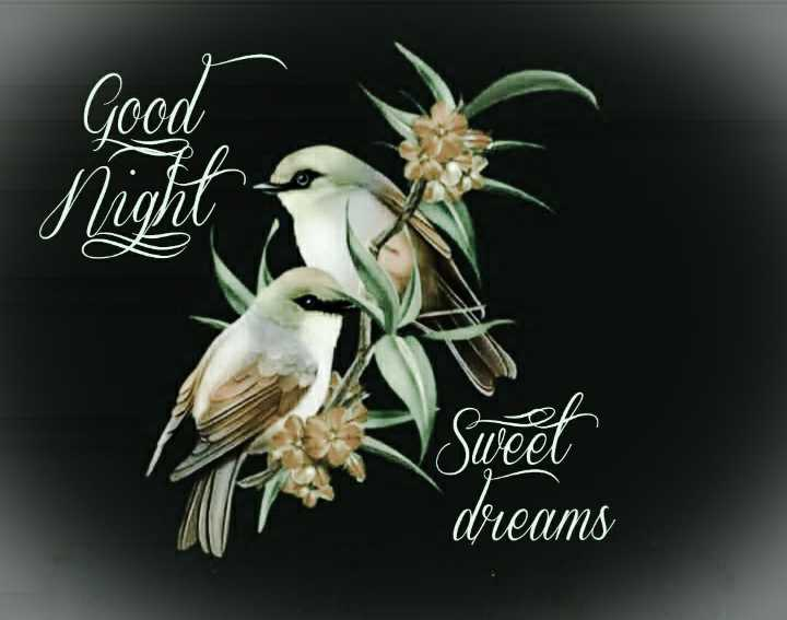 🌙 गुड नाईट - Sweet dreams - ShareChat