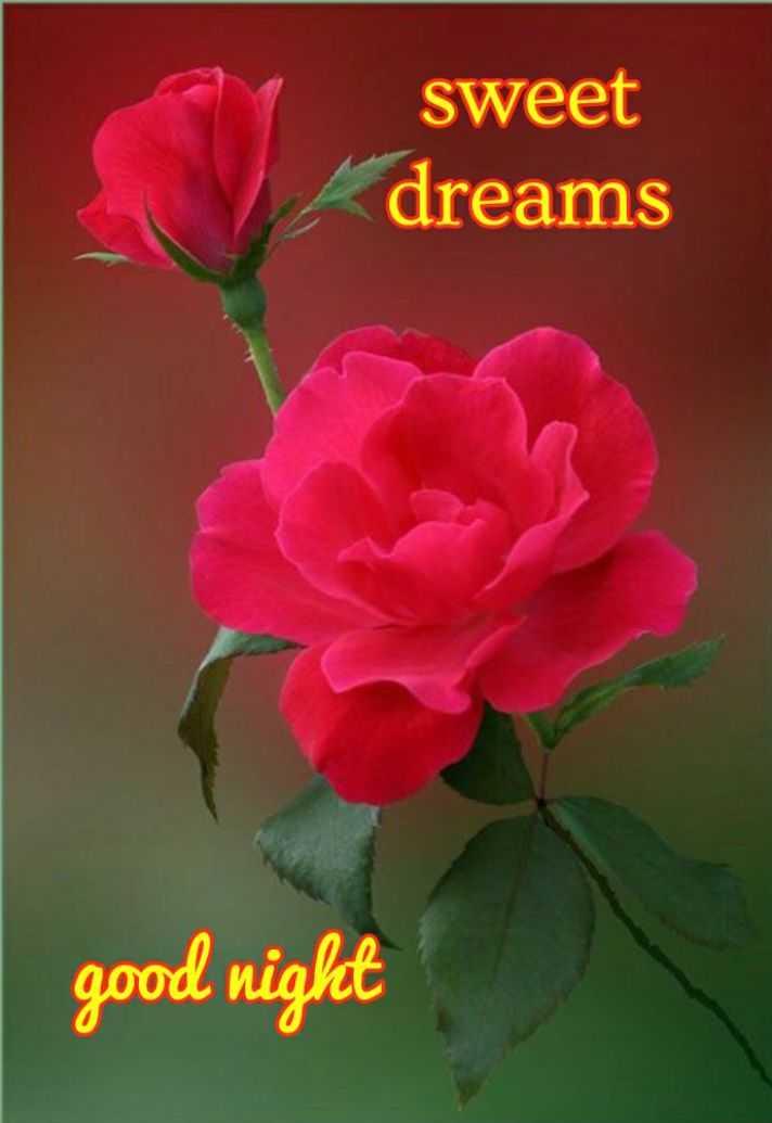🌙 गुड नाईट - sweet dreams good night - ShareChat