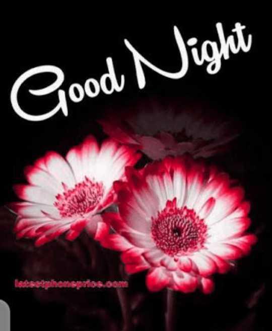 🌙 गुड नाईट - Good Night listestphenspa OTO . - ShareChat