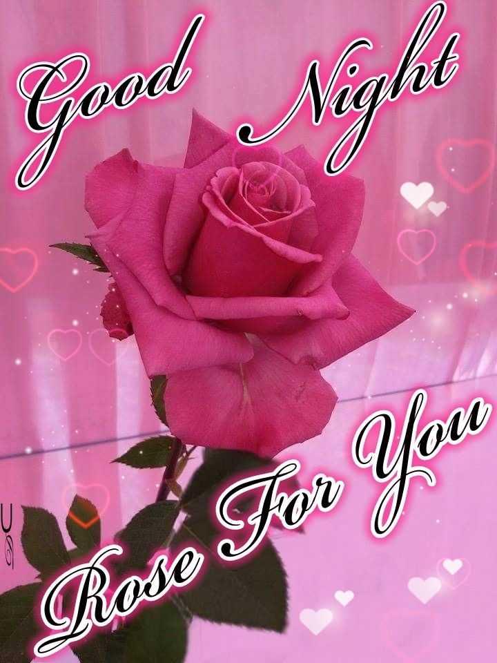 🌙 गुड नाईट - Good Neglul ODA Rose For You - ShareChat