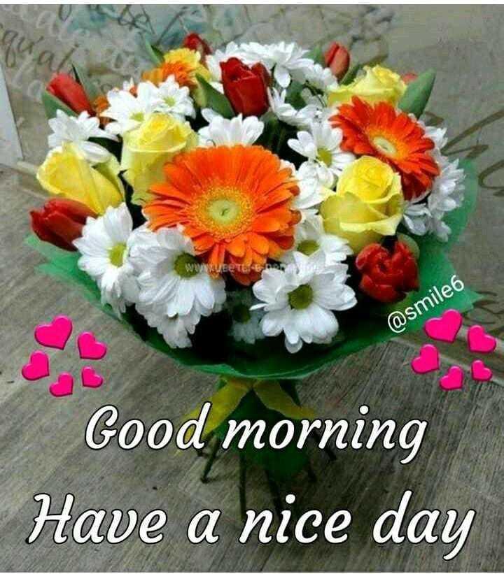 गुड मॉर्निंग शायरी - @ smile6 Good morning Have a nice day - ShareChat