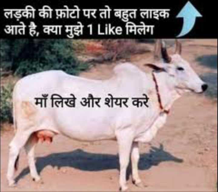 🐄 गौ माता - लड़की की फ़ोटो पर तो बहुत लाइक आते है , क्या मुझे 1 Like मिलेग माँ लिखे और शेयर करे - ShareChat