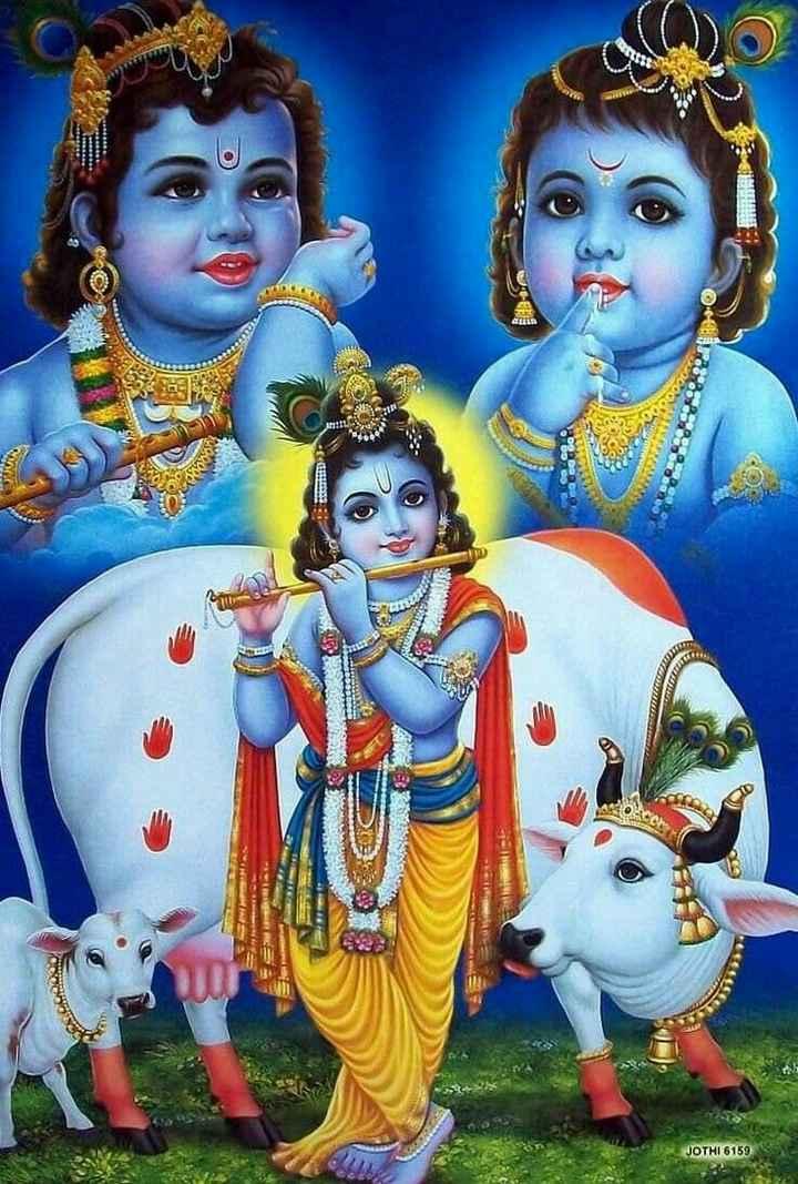 🐄 गौ माता - JOTHI 6159 - ShareChat