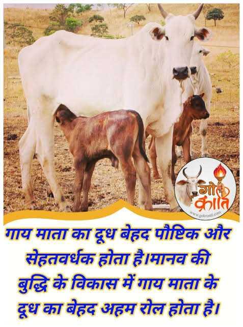 🐄 गौ सेवा दिवस - > क्रात गाय माता का दूध बेहद पौष्टिक और सेहतवर्धक होता है । मानव की बुद्धि के विकास में गाय माता के दूध का बेहद अहम रोल होता है । - ShareChat