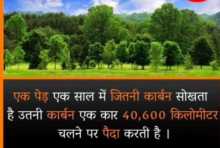 👌 चलो कुछ नया सीखें - एक पेड़ एक साल में जितनी कार्बन सोखता । है उतनी कार्बन एक कार 40 , 600 किलोमीटर चलने पर पैदा करती है । - ShareChat