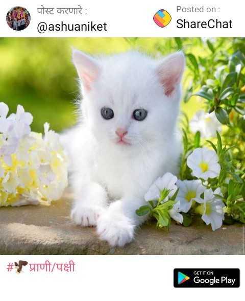 🌞चाहूल उन्हाळ्याची - पोस्ट करणारे : @ ashuaniket Posted on : ShareChat # प्राणी / पक्षी GET IT ON Google Play - ShareChat