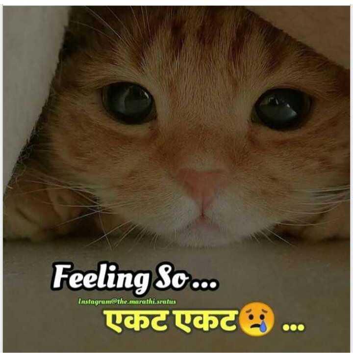 💔जख्मी दिल - Feeling So . . . एकट एकट . . . Instagram @ the . marathi . sratus - ShareChat