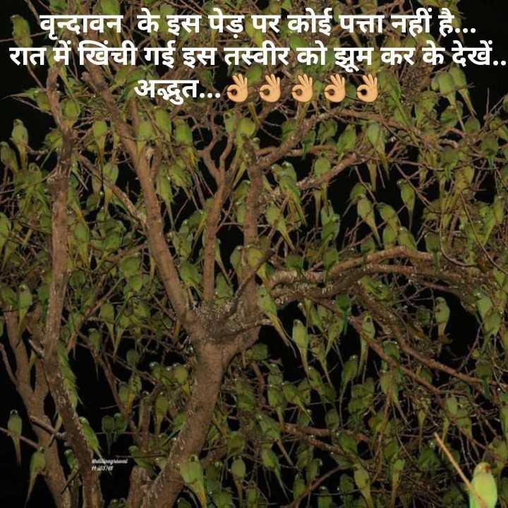 🙏🙏 जय शनिदेव 🙏🙏 - वृन्दावन के इस पेड़ पर कोई पत्ता नहीं है . रात में खिंची गई इस तस्वीर को झूम कर के देखें . . अद्भुत . . . - ShareChat