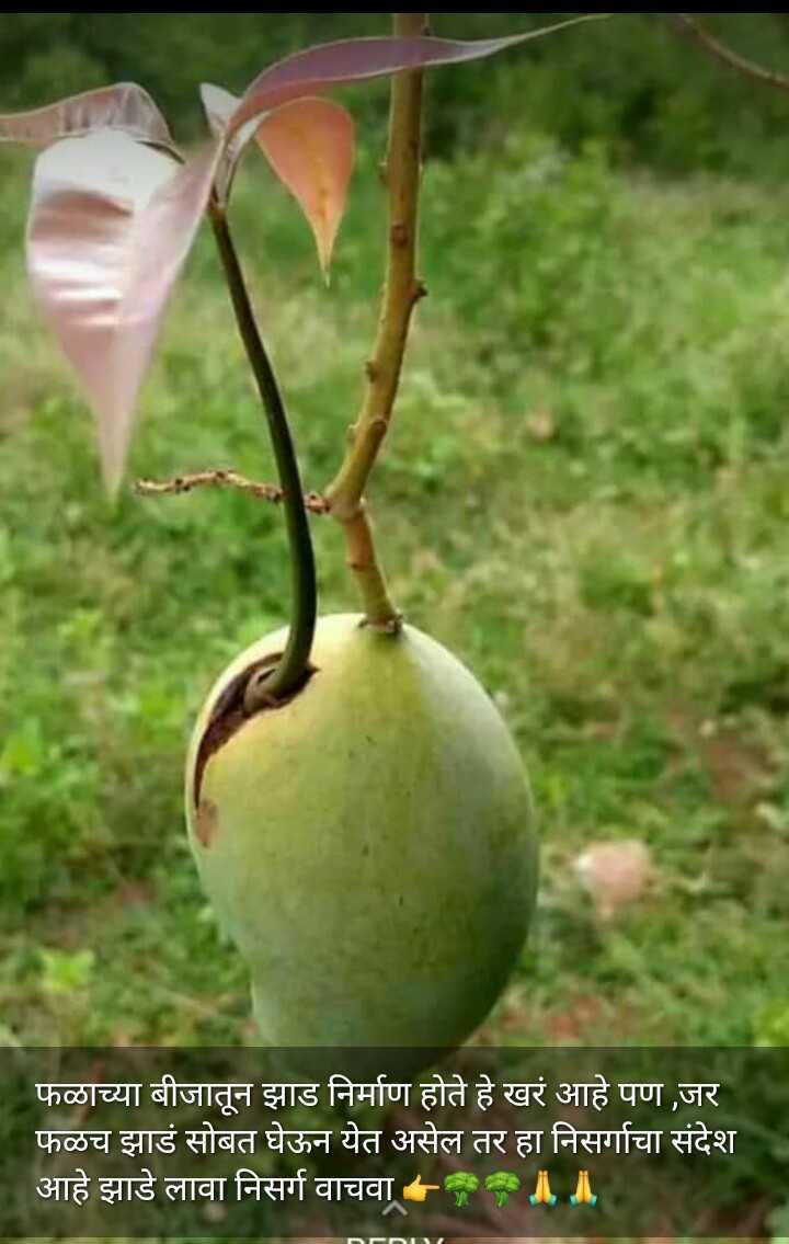 🏞जागतिक पर्यावरण दिवस - फळाच्या बीजातून झाड निर्माण होते हे खरं आहे पण , जर । फळच झाडं सोबत घेऊन येत असेल तर हा निसर्गाचा संदेश आहे झाडे लावा निसर्ग वाचवा ॥ ॥ - ShareChat