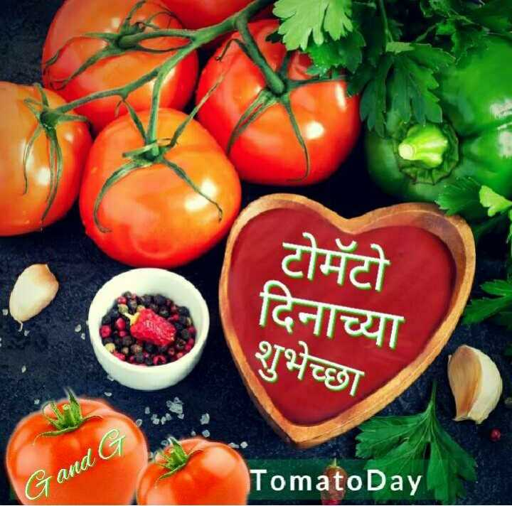 🍅टोमॅटो डे - टोमॅटो दिनाच्या शुभेच्छा Gand G Tomato Day - ShareChat