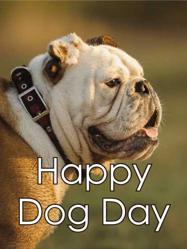 🐕 डॉग डे - Happy Dog Day - ShareChat
