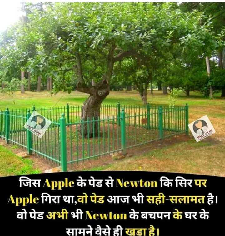 📸 दिलबहार फोटो - FACE GYAN जिसApple के पेड से Newton कि सिर पर Apple गिरा था , वो पेड आज भी सही - सलामत है । - वो पेड अभी भी Newton के बचपन के घर के सामने वैसे ही खडा है । - ShareChat