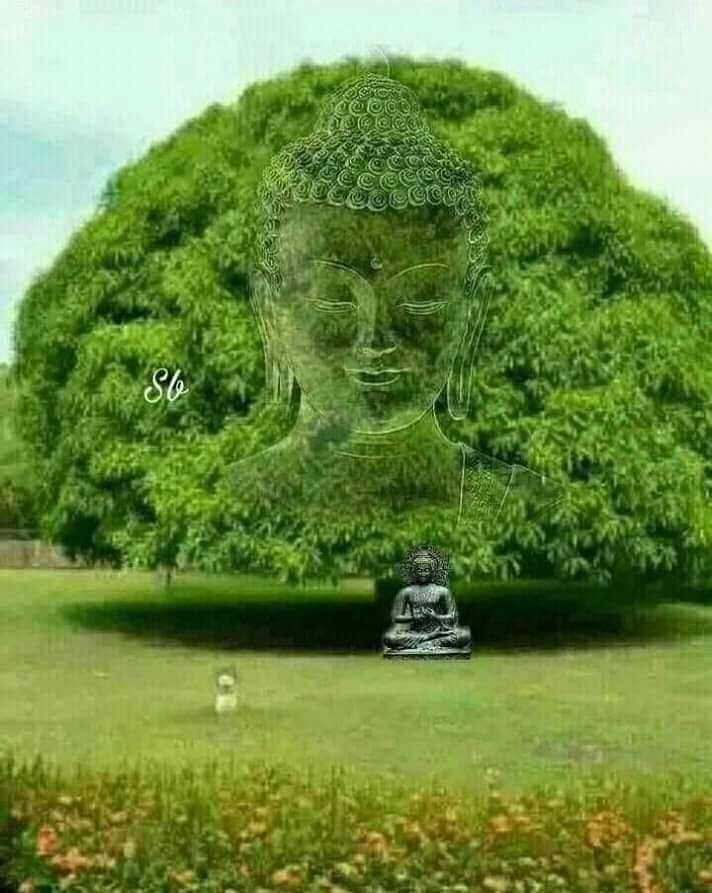 🙏 नमो बुद्धाय 🙏 - ൽ ത്വ ി വിത്ത് പാ - ShareChat