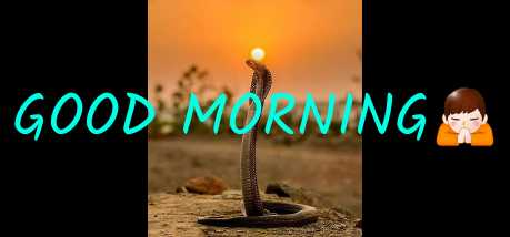 🎉नया साल, नया उमंग - GOOD MORNING - ShareChat