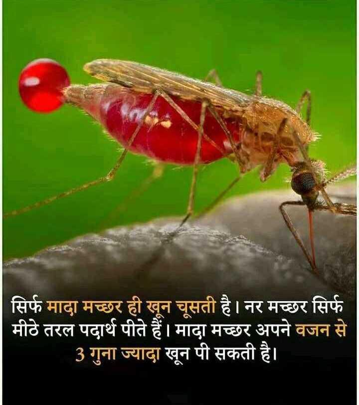 💻 नेशनल टेक्नोलॉजी डे - सिर्फ मादा मच्छर ही खून चूसती है । नर मच्छर सिर्फ मीठे तरल पदार्थ पीते हैं । मादा मच्छर अपने वजन से 3 गुना ज्यादा खून पी सकती है । - ShareChat