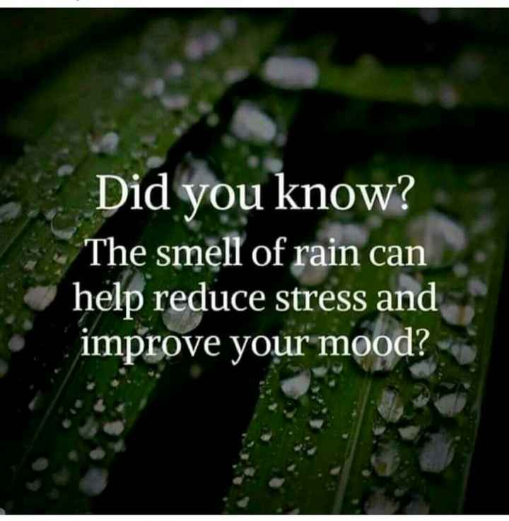⛈पाऊस कविता - Did you know ? The smell of rain can help reduce stress and improve your mood ? Aa - ShareChat
