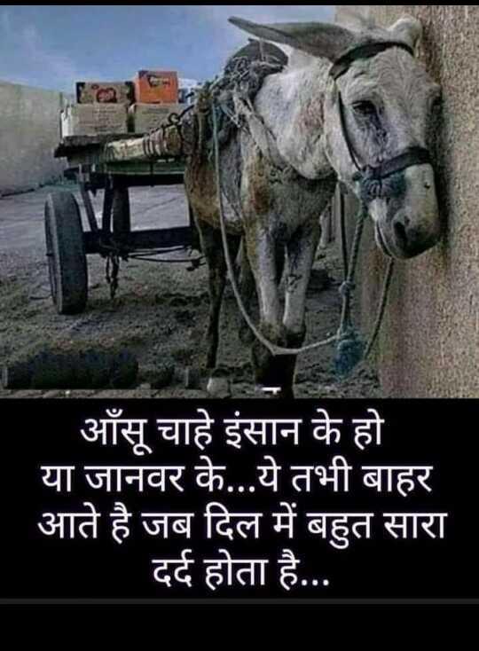 📺 पुरानी_यादें - आँसू चाहे इंसान के हो या जानवर के . . . ये तभी बाहर आते है जब दिल में बहुत सारा दर्द होता है . . . - ShareChat