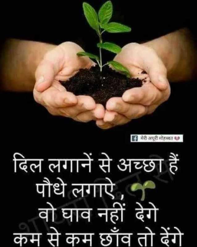 🌱पौधों को पानी - F मेरी अधूरी मोहब्बत दिल लगाने से अच्छा हैं पौधे लगाए , वो घाव नहीं देगे कम से कम छाँव तो देंगे IC - ShareChat