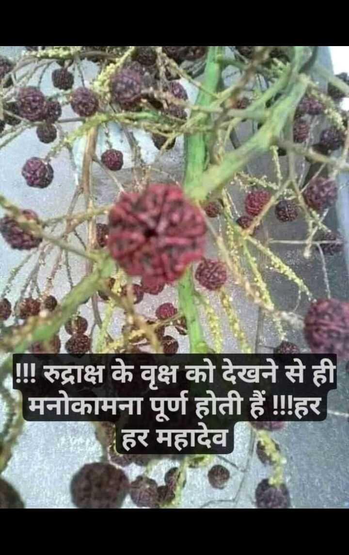 🌱पौधों को पानी - ! ! ! रुद्राक्ष के वृक्ष को देखने से ही मनोकामना पूर्ण होती हैं ! ! ! हर हर महादेव - ShareChat