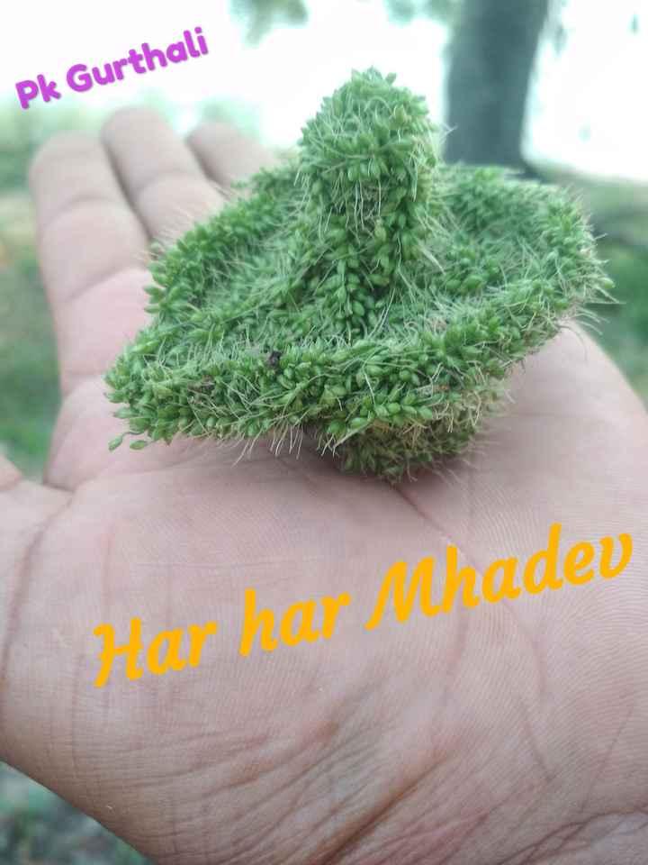 🍃 प्रकृति पूजा - Pk Gurthali Hor har Mhadev - ShareChat