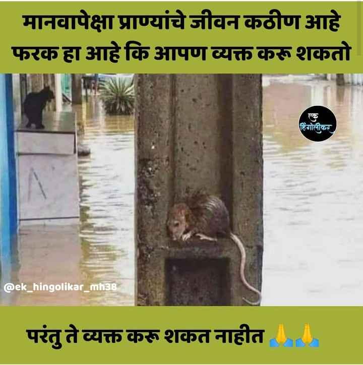 🐿प्राणी प्रेम - मानवापेक्षा प्राण्यांचे जीवन कठीण आहे फरक हा आहे कि आपण व्यक्त करू शकतो हिंगोलीकर @ ek _ hingolikar _ mh38 परंतु ते व्यक्त करू शकत नाहीत - ShareChat