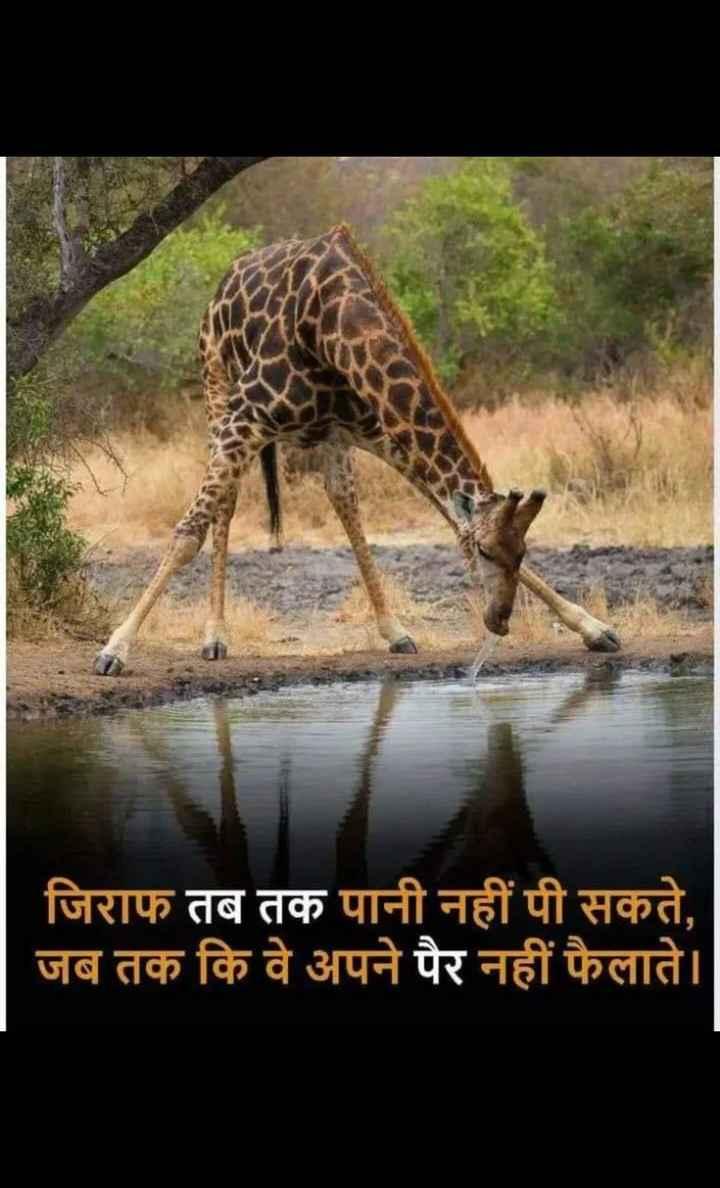 🦅प्राणी/पक्षी - जिराफ तब तक पानी नहीं पी सकते , जब तक कि वे अपने पैर नहीं फैलाते । - ShareChat