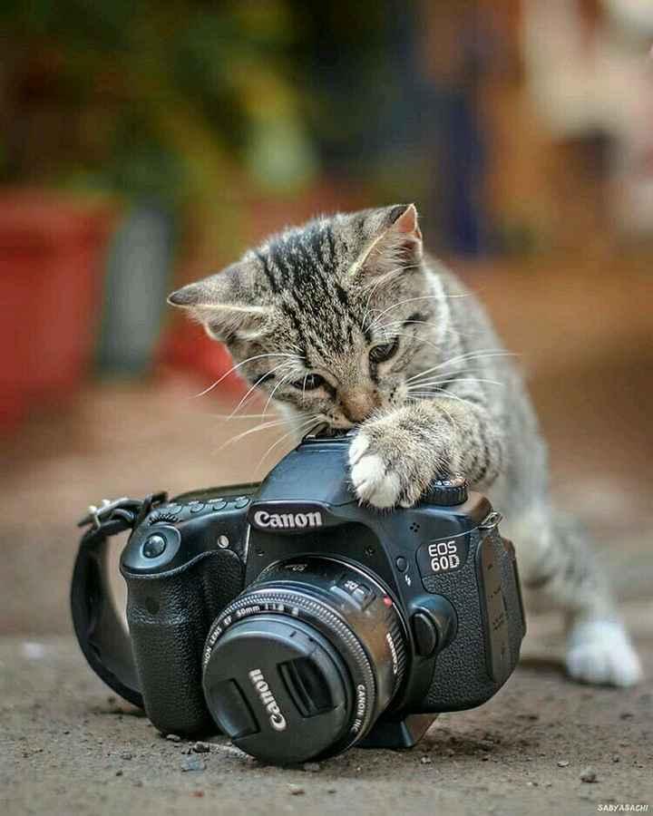 🦅प्राणी/पक्षी - Canon FOS Canon CANON SABYASACHI - ShareChat