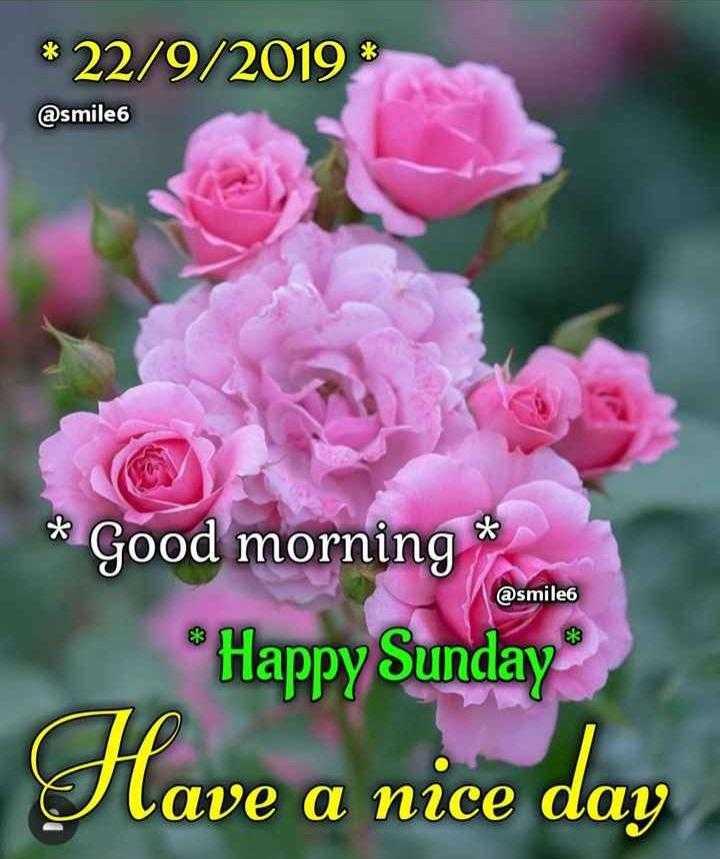 💗प्रेम / मैत्री स्टेट्स - * 22 / 9 / 2019 % @ smile 6 @ smile6 * Good morning * Happy Sunday Have a nice day - ShareChat