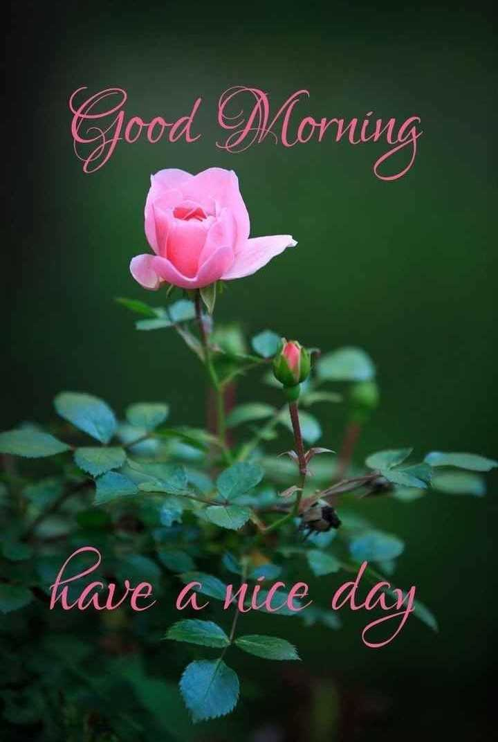 🙏प्रेरणादायक / सुविचार - Good Morning have a nice day - ShareChat