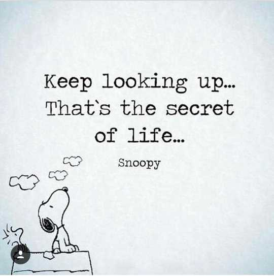 🙏प्रेरणादायक / सुविचार - Keep looking up . . . That ' s the secret of life . . . Snoopy - ShareChat