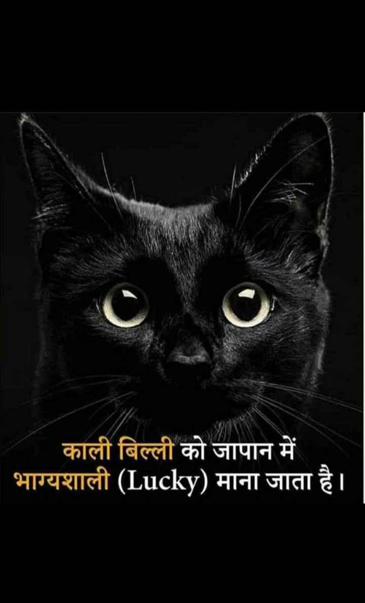 🙏प्रेरणादायक / सुविचार - काली बिल्ली को जापान में भाग्यशाली ( Lucky ) माना जाता है । - ShareChat