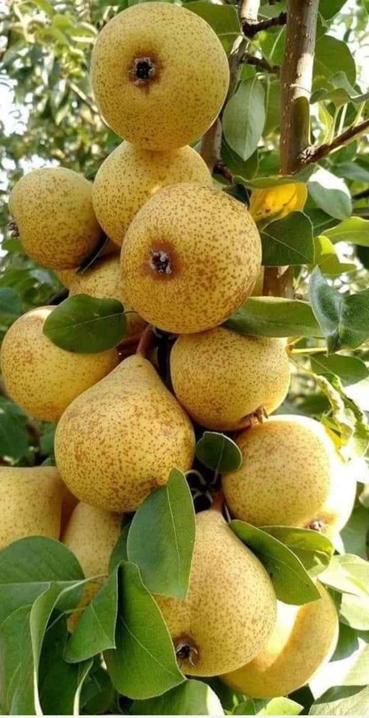 फळे - ShareChat
