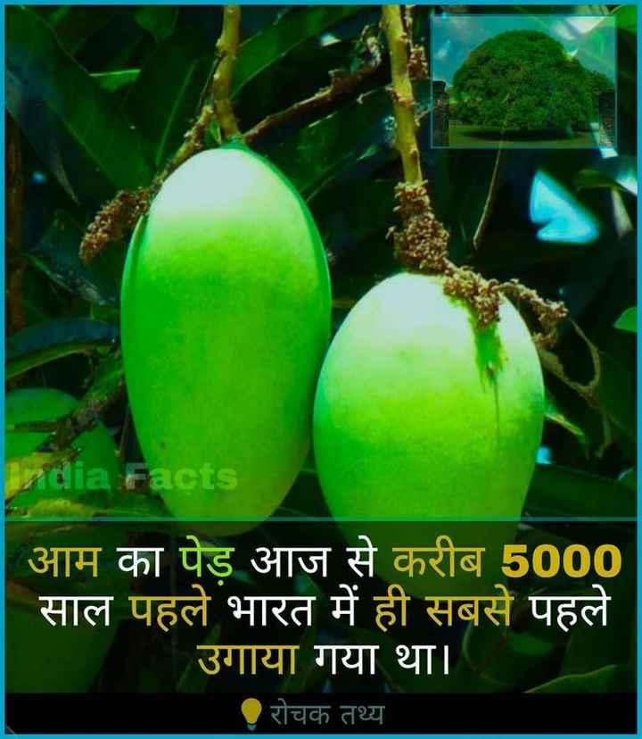फ्रूट्स - ia Facts आम का पेड़ आज से करीब 5000 साल पहले भारत में ही सबसे पहले उगाया गया था । रोचक तथ्य - ShareChat