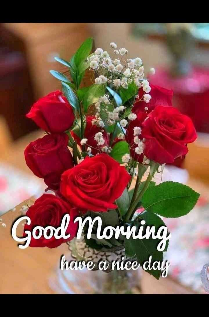 💐 फ्लावर फोटोग्राफी - Good Morning haise a nice day - ShareChat